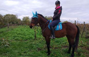 Úraz koně