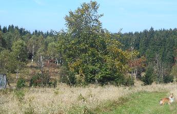 Chata blízko přírody