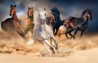 pastviny, koně