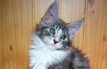 Splacení nevýhodných půjček a koupi chovné kočky