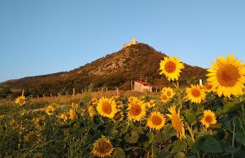 Maly raj pro milovniky prirody uprostred vinic
